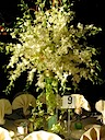 Dramatic Orchid Centerpiece